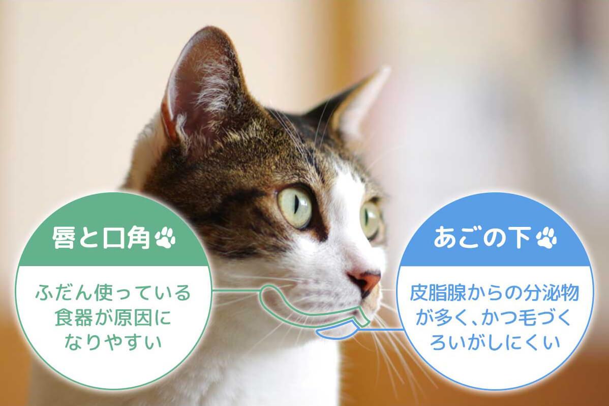 にきび 猫 あご 猫のあごに出来る黒い汚れの原因とケア方法【猫ニキビ】