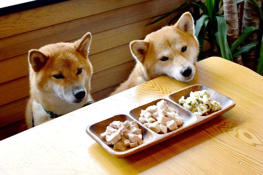 犬がご飯を食べない 4つの理由と対策 病気かどうかのチェック